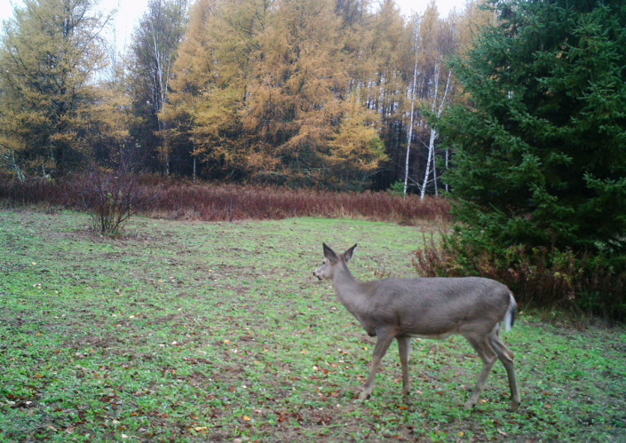 how to keep deer away from your property