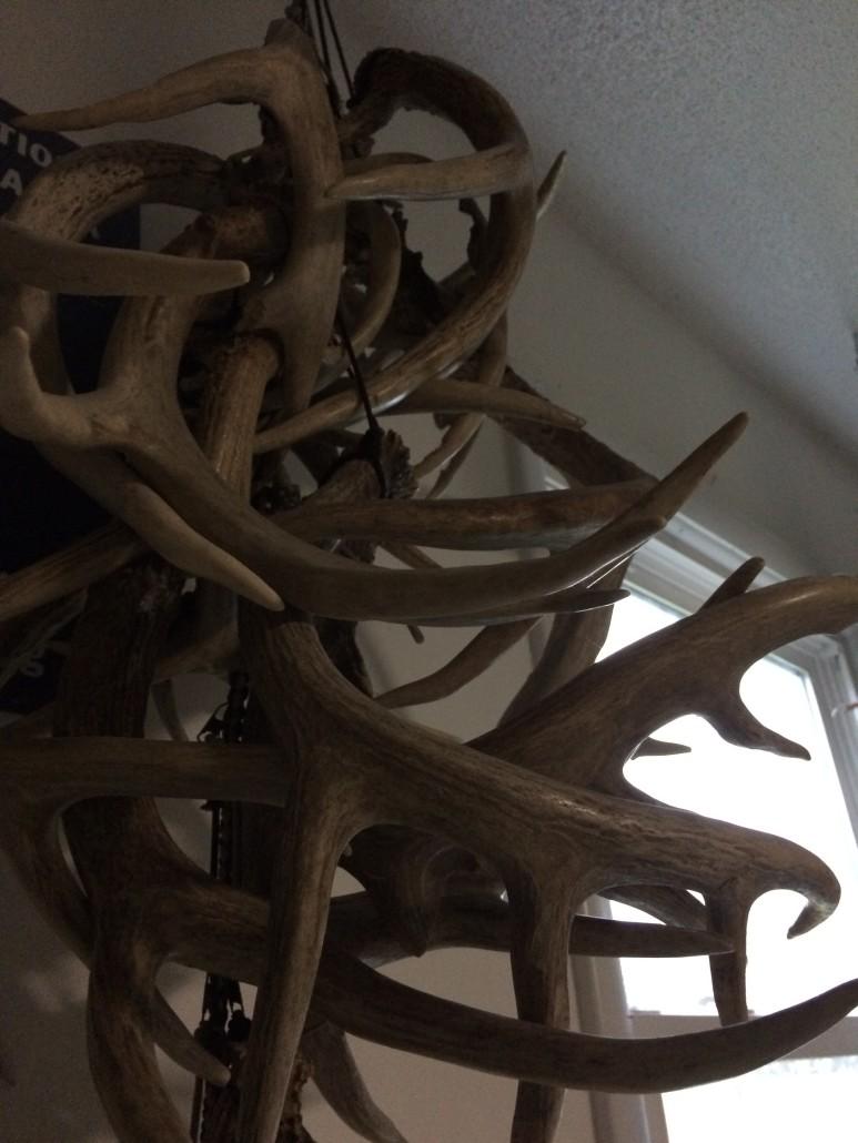 Shed hunting season | Head Hunters TV